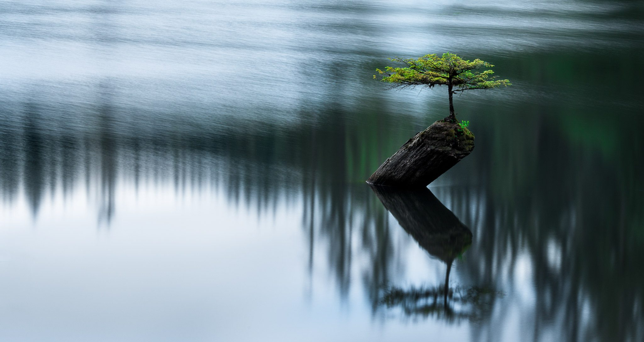Ferry Tree near Port Renfrew Vancouver Island
