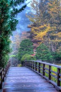 Japanese Tea Gardens San Francisco CA