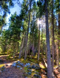 Grassi Lake Path Canmore Alberta