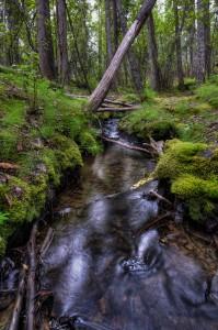 Wilson Stream 2 Whitehorse Yukon