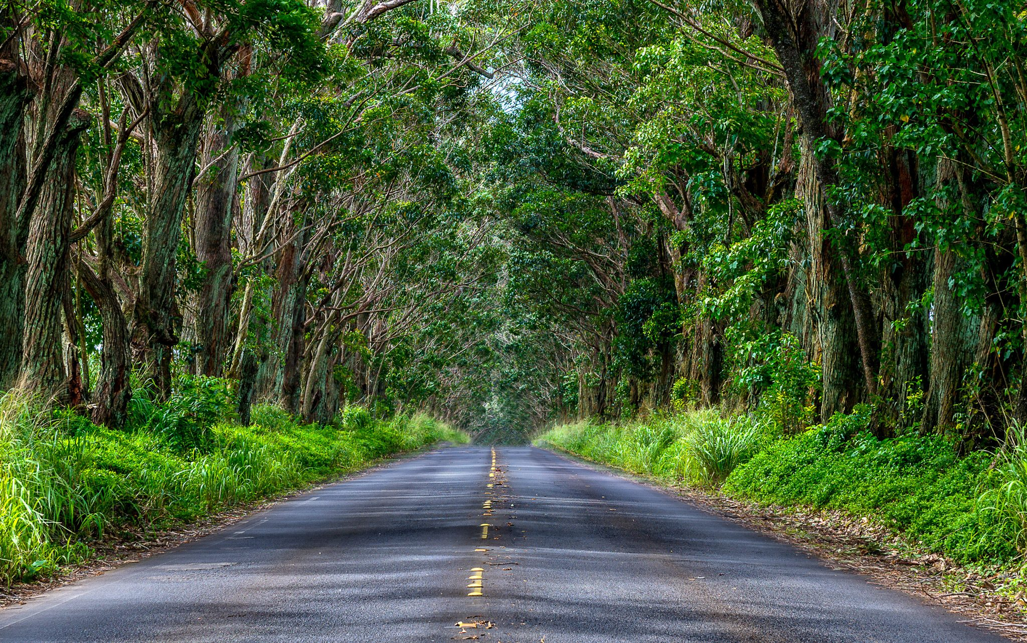Tree Tunnel Kauai